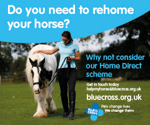 Blue Cross 2020 A (North Yorkshire Horse)