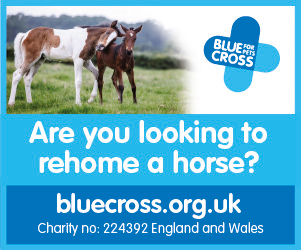 Blue Cross 2020 B (North Yorkshire Horse)