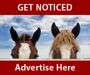 Get Noticed (North Yorkshire Horse)